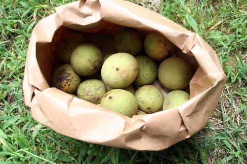 BagWalnuts