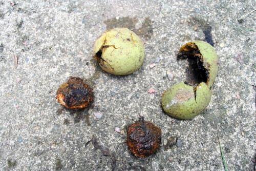 HullingWalnuts