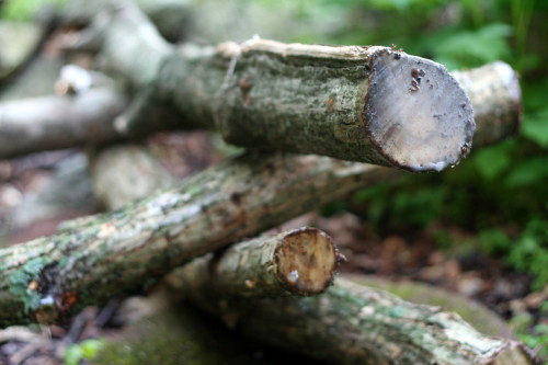 Waxed Logs_3880