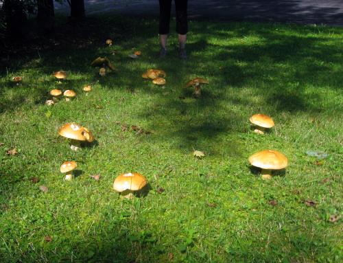 MushroomRing