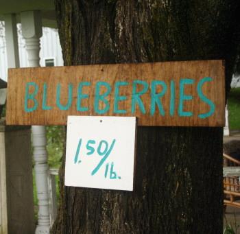 BlueberrySign