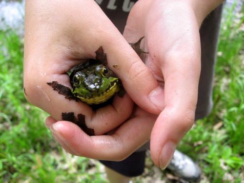 Frog1Rev