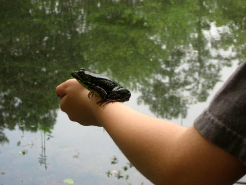 Frog2Rev