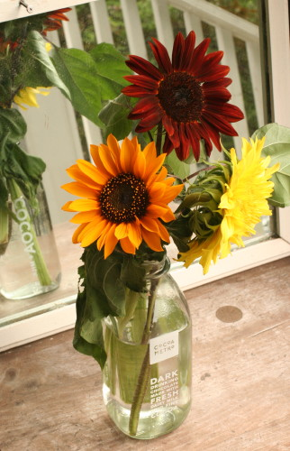 Sunflowers_7474
