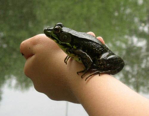 Frog3Rev