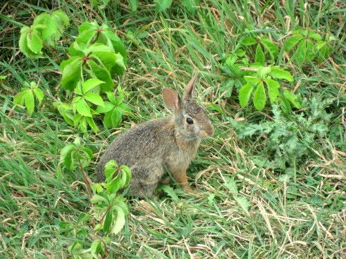 Bunny4664