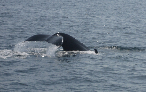 Whale Tail_6361