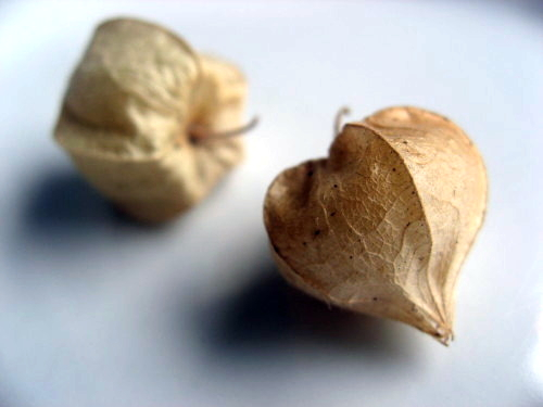 GroundCherries2