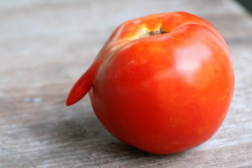 Funny Tomato_0749