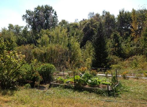 School Garden_0665