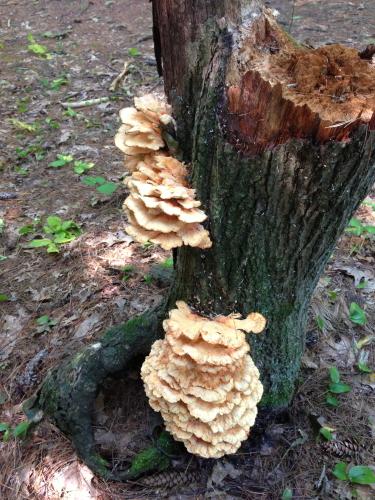 Chicken Mushroom_0638