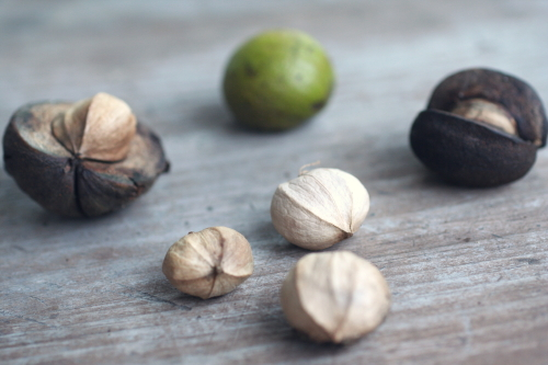 Hickory Nuts_0957