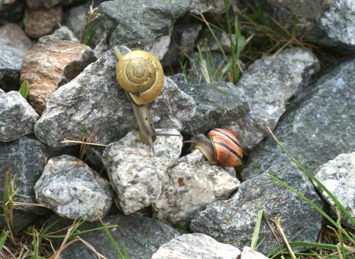 Snails_2610