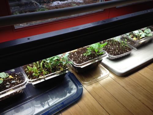 Seedlings_3231