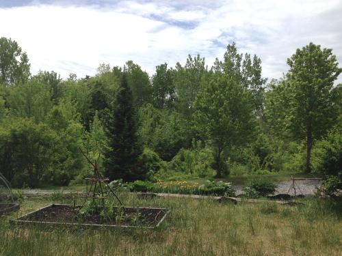 School Garden_3464