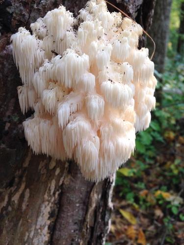 Some Wild Mushrooms I Found Food On The Food