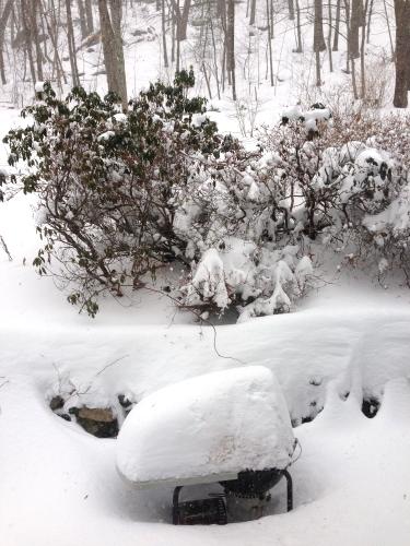 Snow_3075